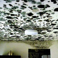 mold-mildew-ceiling-inspection-testing