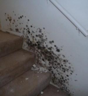 el-segundo-mold-staircase-inspection-testing