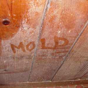 south-pasadena-mold