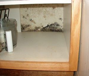 mold growth under pinole sink