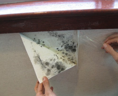 mold-inspection-for-hotels-in-lax