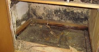 mold-inspection-in-pleasanton