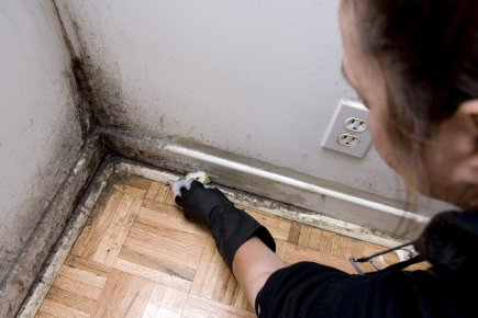 mold-removal-in-san-bernardino