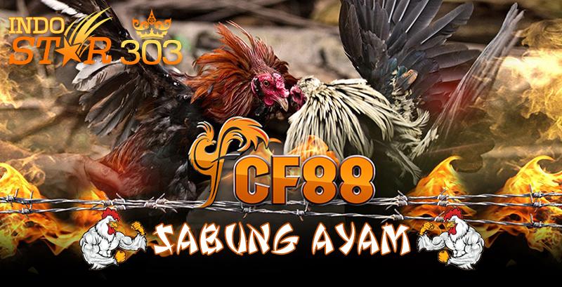 Agen Sabung Ayam Online - CF88 Situs Taruhan Agen Sabung Ayam Online Terbaru