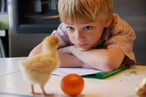 Meningkatkan Memori Anak