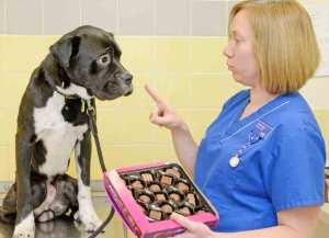 Makanan yang Berbahaya Bagi Anjing