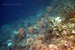underwater life @ kakaban beach-1