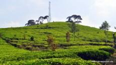 Perkebunan teh malabar, yang dibangun dan dikelola K.A.R. Bosscha selama hidupnya, sekarang dikelola Perkebunan Nusantara VIII