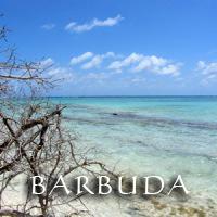 gal Barbuda