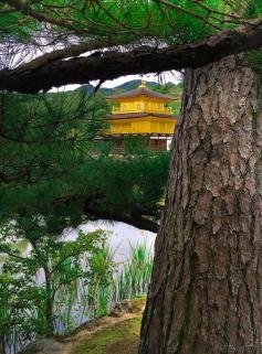 Around Japan - Kyoto Golden Pavilion (Kinkaku-ji) by Matias Masucci