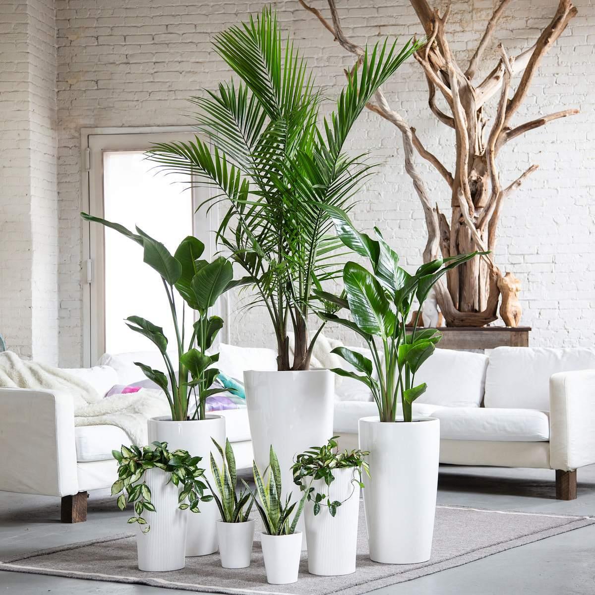 Piante Da Appartamento Ambiente Buio piante da interni · in2