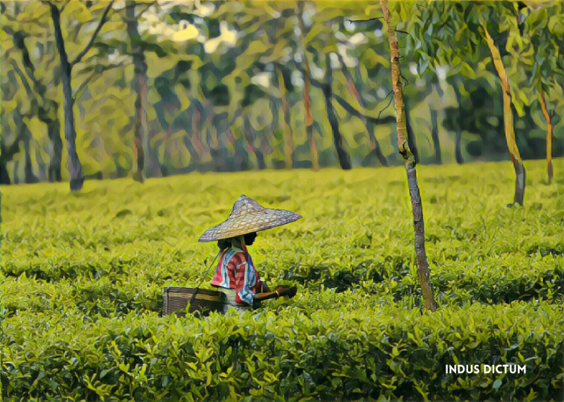 chai bagan tea plantation