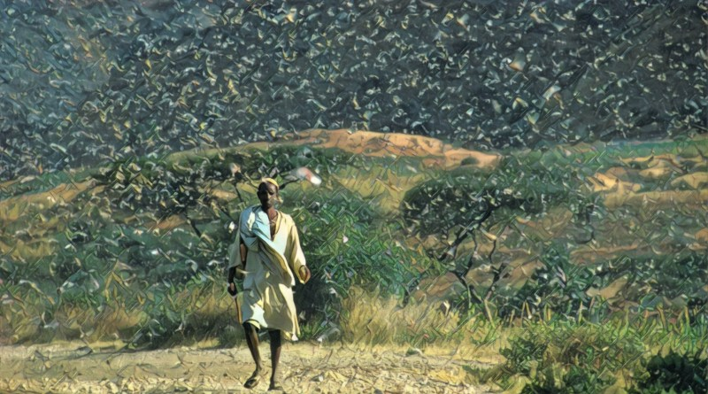 Locusts are denuding Pakistani cotton farms, poised to spread into India