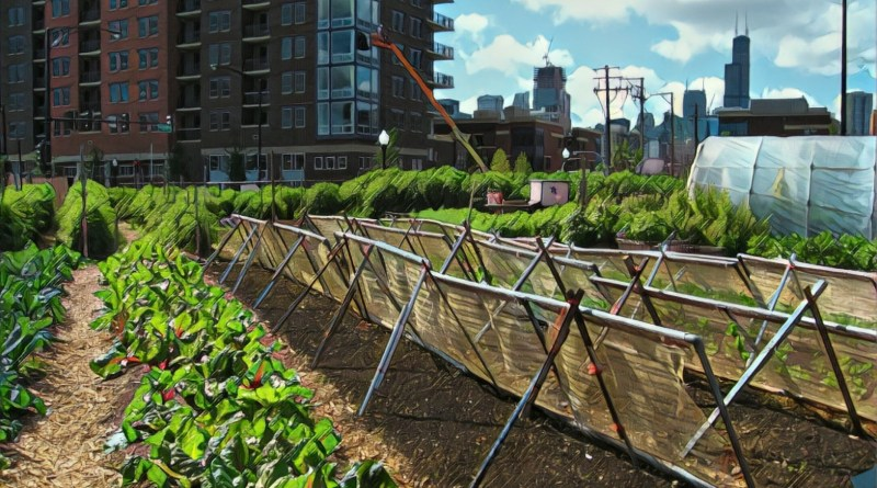 Smart Cities Council India recognises urban farming idea by Bengaluru's 10by10 Studio