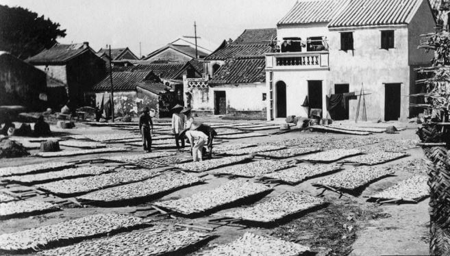 Cheung Cha fish drying c1920s Courtesy, HKU libraries - HK Memory snipped image