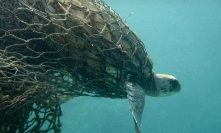 Oceana Report Declares Alarming Bycatch Statistics