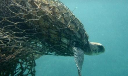 Oceana Report Declares Alarming Bycatch Statistics