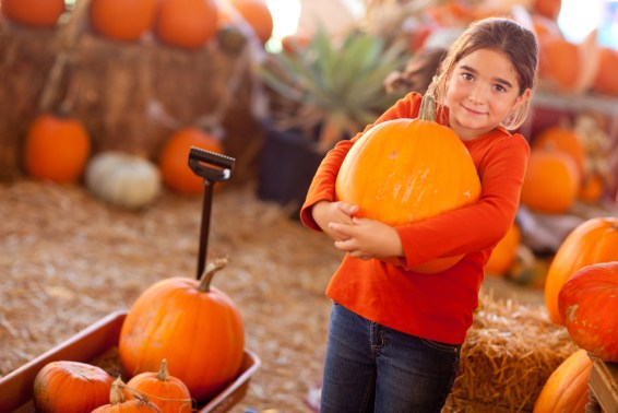 A little girl holding a big pumpkin in a pumpkin patch.