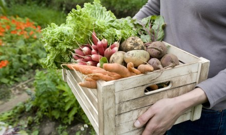 U.S. Schools Providing More Local Food