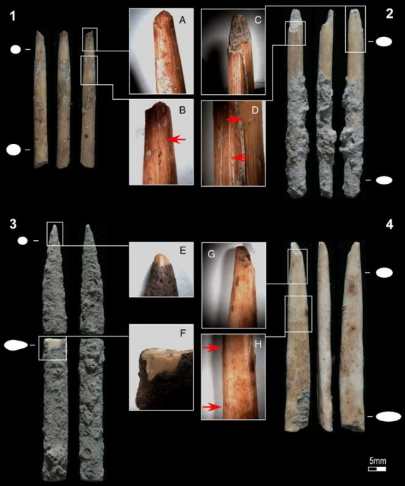 Poison arrows and bone utensils in late Pleistocene eastern Africa: evidence from Kuumbi Cave, Zanzibar. Four of the projectile point fragments recovered from Kuumbi Cave: A, C, and G impact fractures; B and D possible retrieval cut marks; E rounded tip; F post-depositional fracture revealing bone surface; H change in surface appearance.