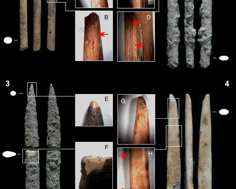 Poison Arrows Found in Africa Reveal a Leap in Human Technology