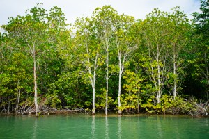 Trees by the side of a river