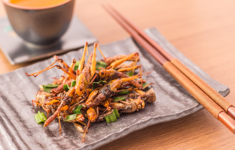 Insects: The Next Big Food Trend