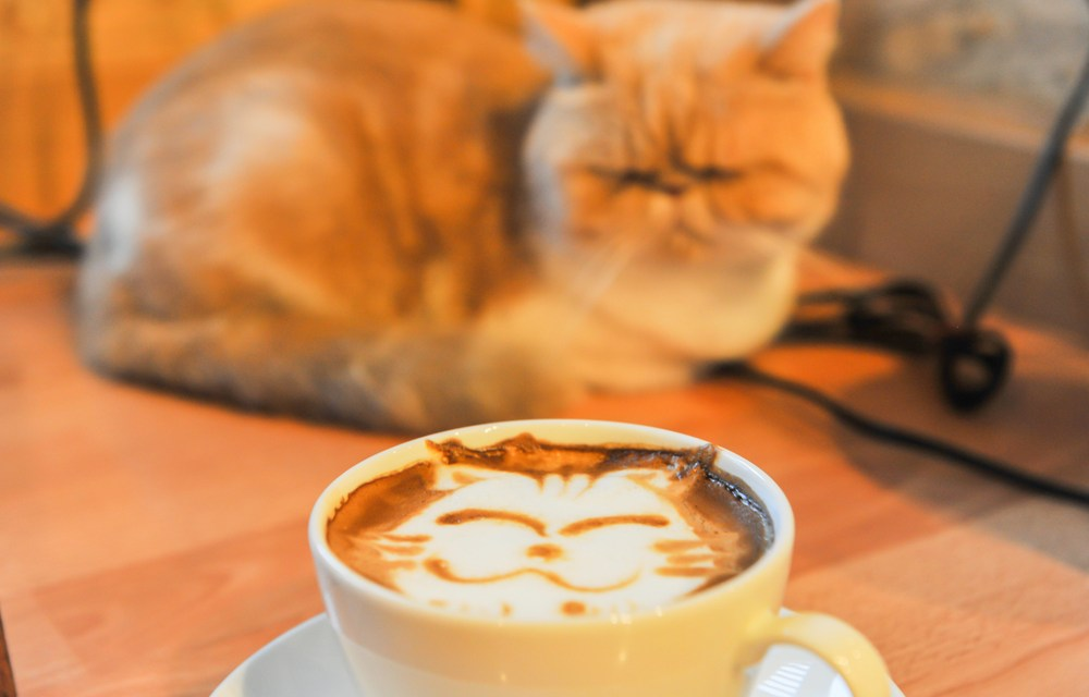 Welcome to Meow Parlour: New York's First Cat Cafe
