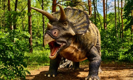 Big John, Largest Triceratops Ever Found, Sells for $7.7M