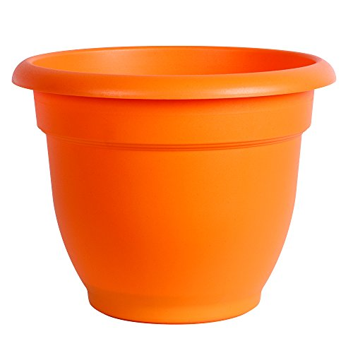 "Bloem Ariana Self Watering Planter, 6"", Tequila Sunrise"