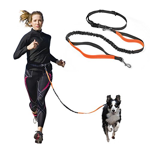 Hands Free Dog Leash with Retractable Leash, Strong Bungee, Dog Waste Bags for All-Size Dogs (Orange)