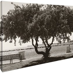 JP London Gallery Wrap Heavyweight Black and White Bonsai