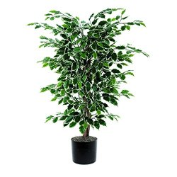 Vickerman 4' Artificial Variegated Ficus Bush set