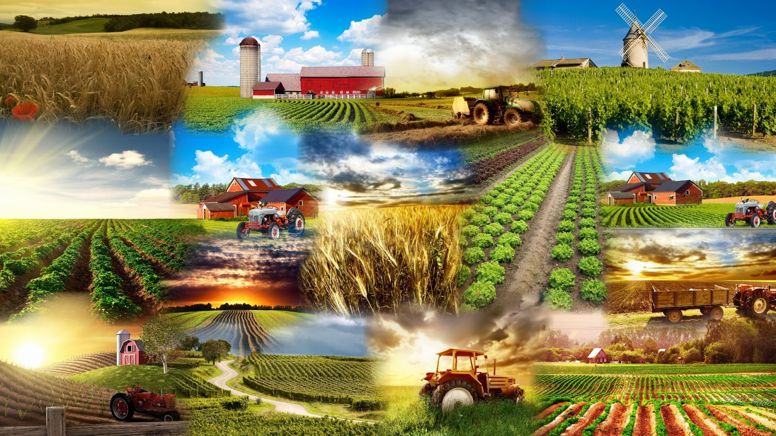 Ο Ελληνικός γεωργικός τομέας και η συμβολή του στην ανάπτυξη