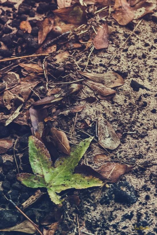 Sandy Soil-151026-153_0004-Edit