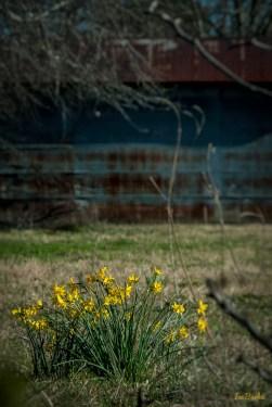 Spring2016-160226-157_0057-Edit