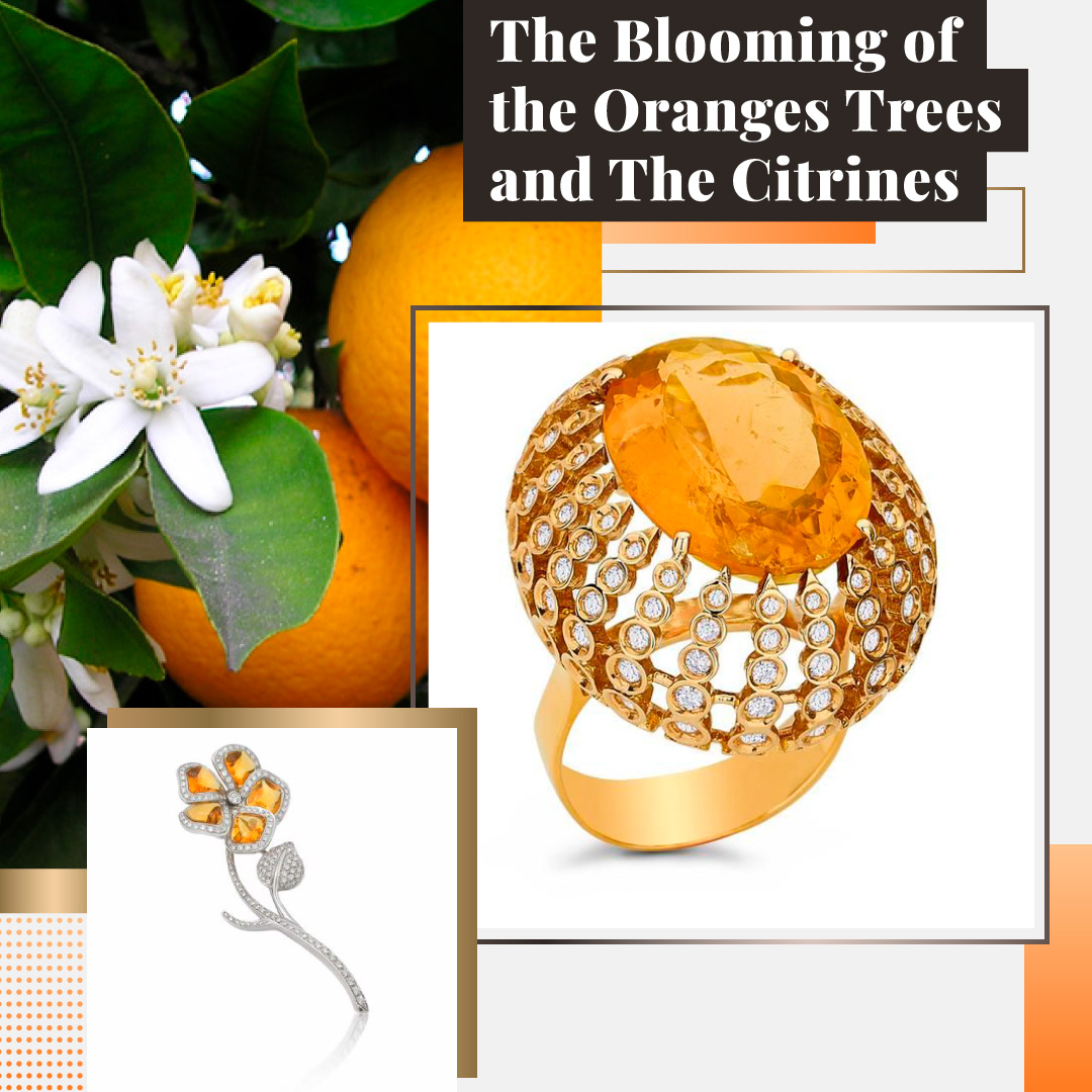 The Blooming of the Oranges Trees and The Citrines