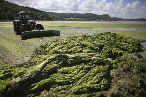 L'Etat jugé responsable de la mort d'un cheval à cause d'algues vertes• Crédits : Reuters
