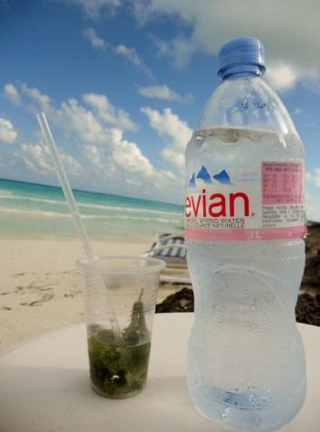 beach sea relax mojito mint water avian