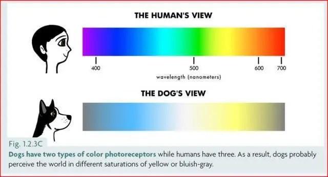 為什么狗能看到人類看不到的東西?_騰訊新聞