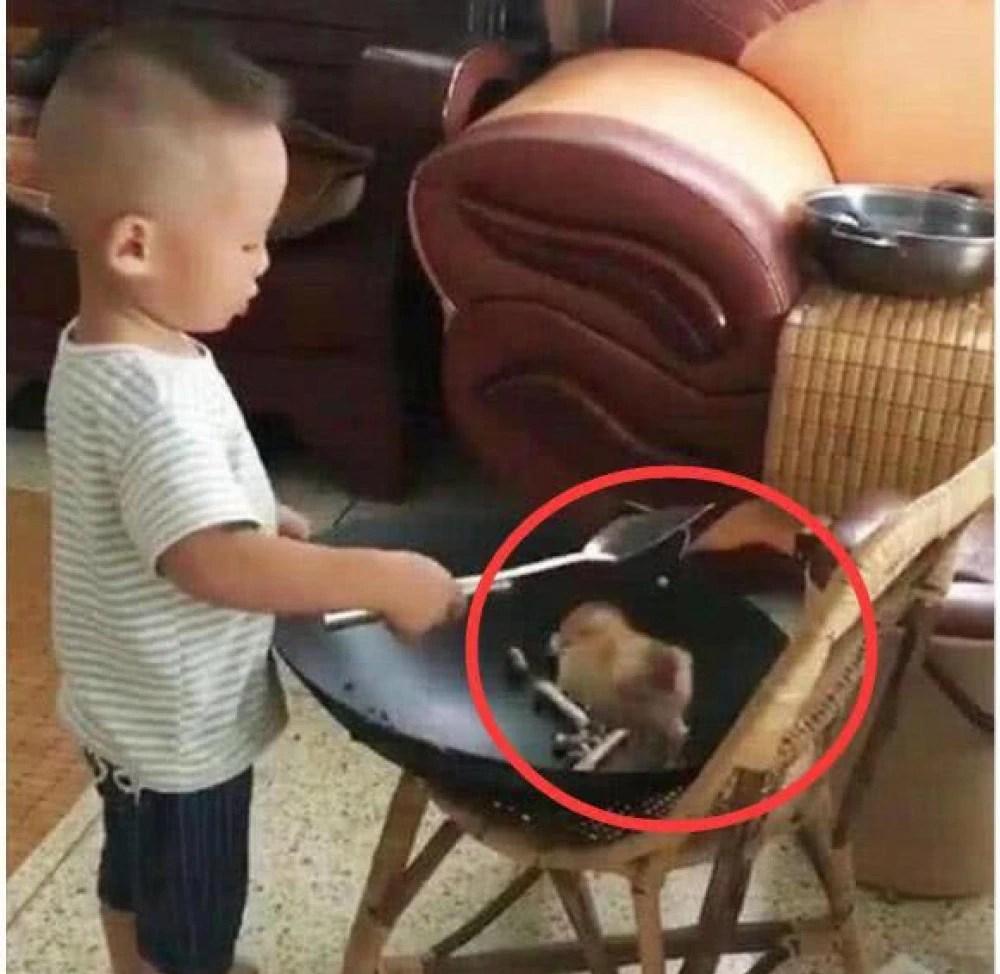 play kitchens for boys vintage kitchen stoves 小男孩在厨房学母亲炒 小炒 原材料居然是家里的宠物活鸡 为男孩们打厨房