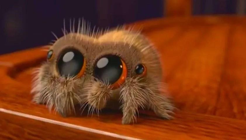 史上最可愛的小蜘蛛又來了!