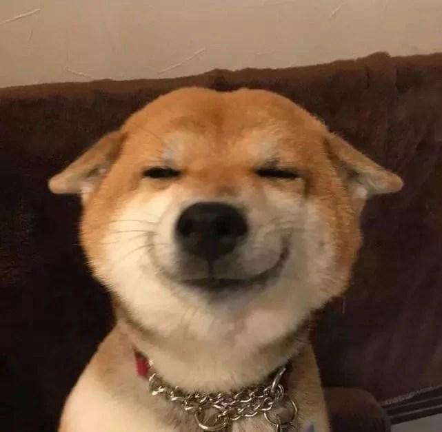 柴犬狗狗的微笑火遍朋友圈,一笑傾城暖人心