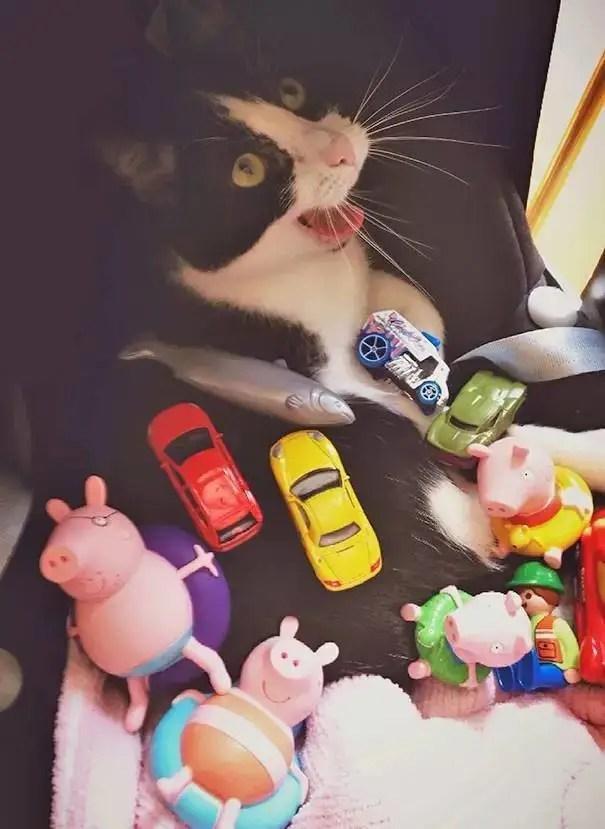 千萬別把孩子和貓單獨留在家中!不然你會後悔……