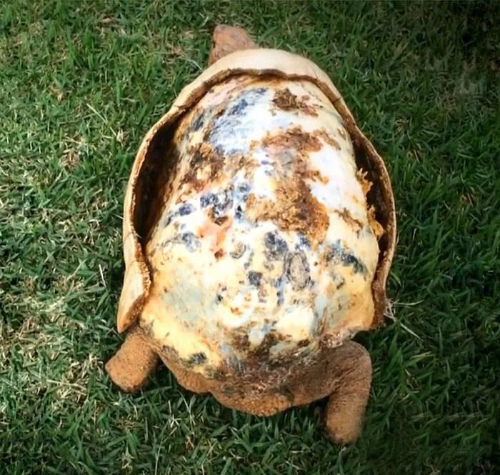 他一定是第一個有3D龜殼的烏龜