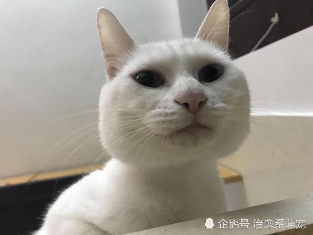 cats in the kitchen counter lamps 网友发现猫咪用一种奇怪的姿势蹲在厨房的水槽里 可没想到下一秒 天天快报 刚开始看到的还是正常的画面 因为猫粮和水都放在厨房里 所以猫咪们经常呆的地方就是厨房了