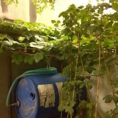 Compost Bin For Kitchen Sink Hole Cover 左手厨房下脚料 右手塑料堆肥箱 自制肥料养花草 天天快报 如果是利用厨房水槽下方的空间放置 建议上述步骤四要搭配厚厚的泥土 3 5厘米 这样当厨余量较多时 泥土可发挥吸水力