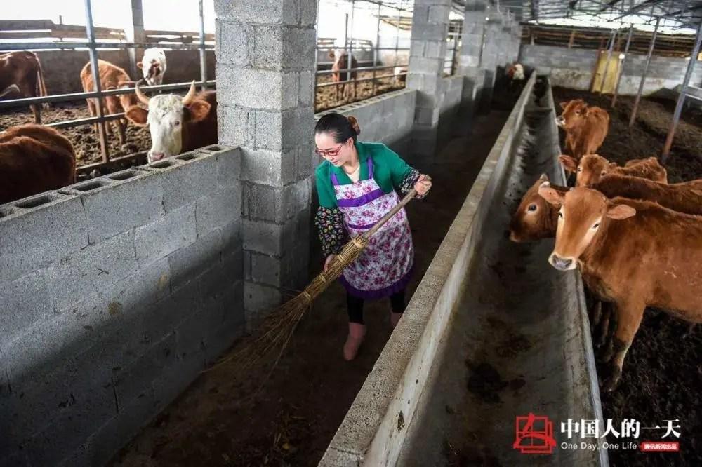 女歌手弃百万年薪去放牛?山洞里养牛发家攒下数千万