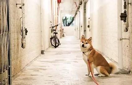 """""""不養狗才能買房"""",是緩解人狗矛盾的有益嘗試"""