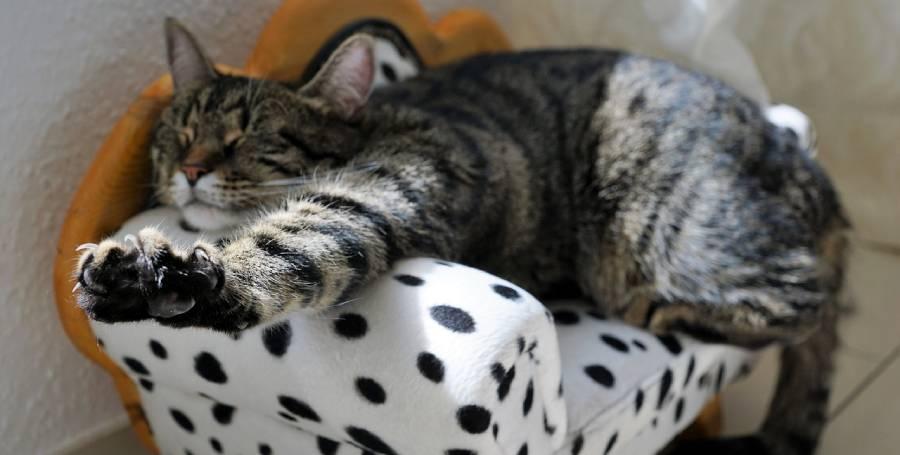 Защо котките прекарват по-голямата част от деня в сън?